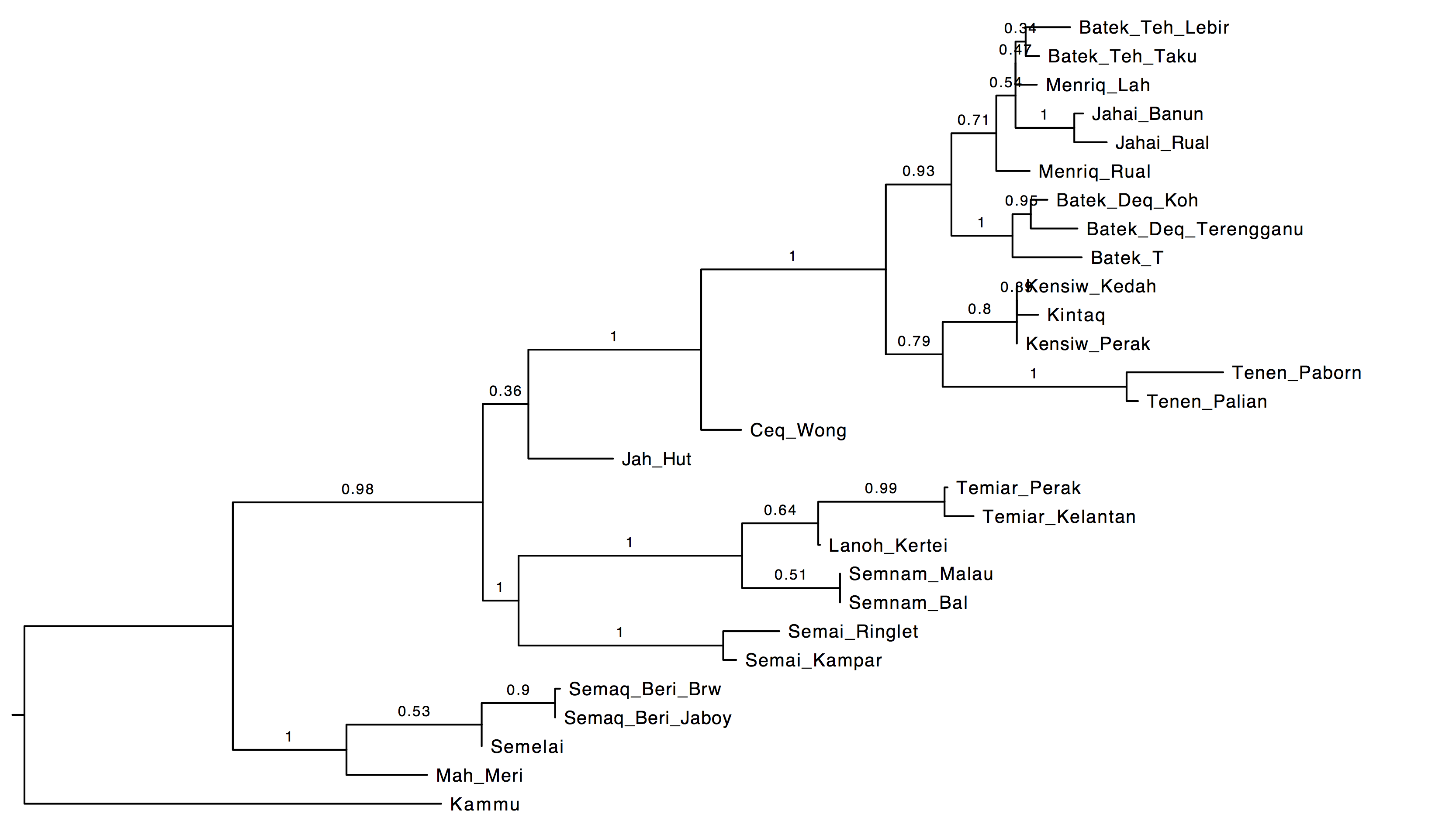 An Aslian family tree from a MCMC search with monophyly constraints for the North Aslian and South Aslian families (drawing by FigTree with posterior probabilities on branches).